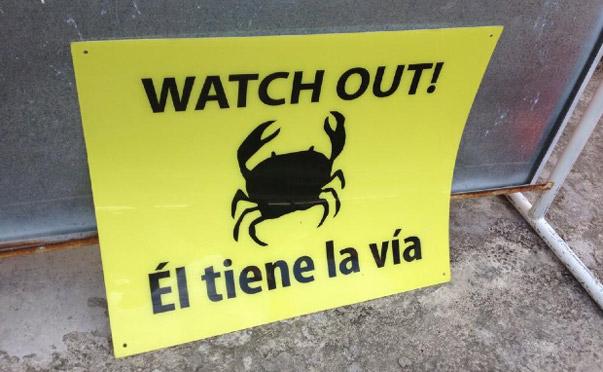 Crab migration alert